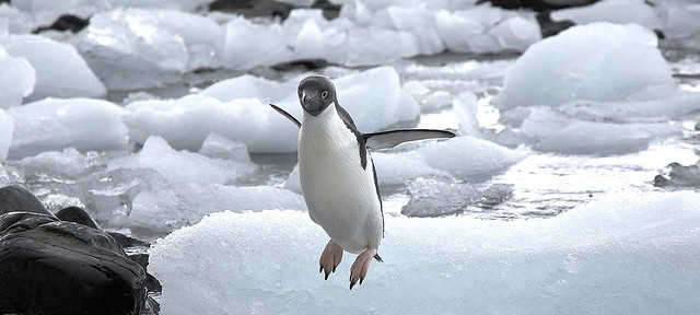 pinguino volador
