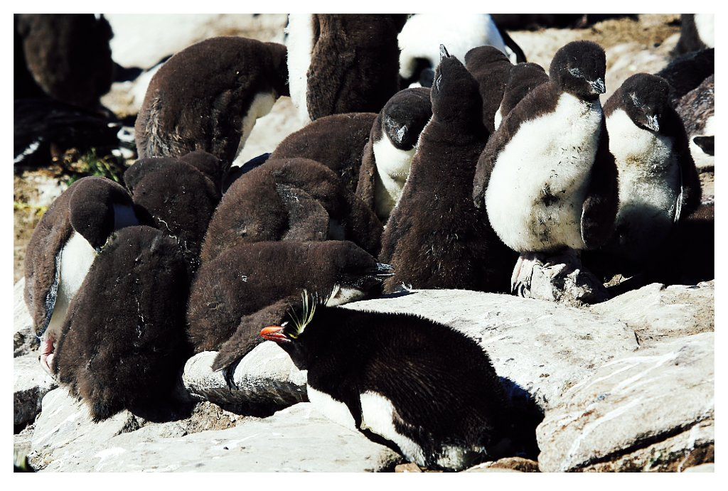 pinguinos dormilones